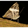 Zac the Zebra Mosaic Butterfly (9/30/2012)