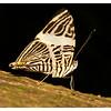 Zac the Zebra Mosaic Butterfly (9/30/2012)