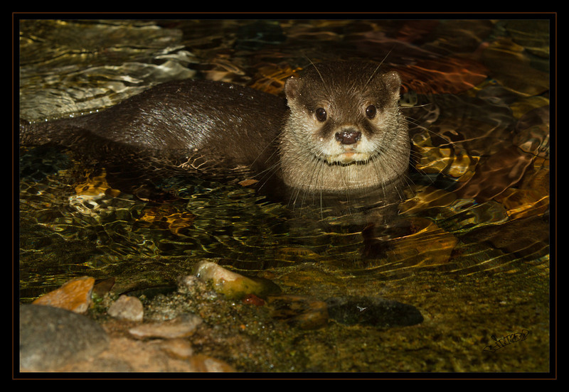 Ollie the Otter (9/13/2012)