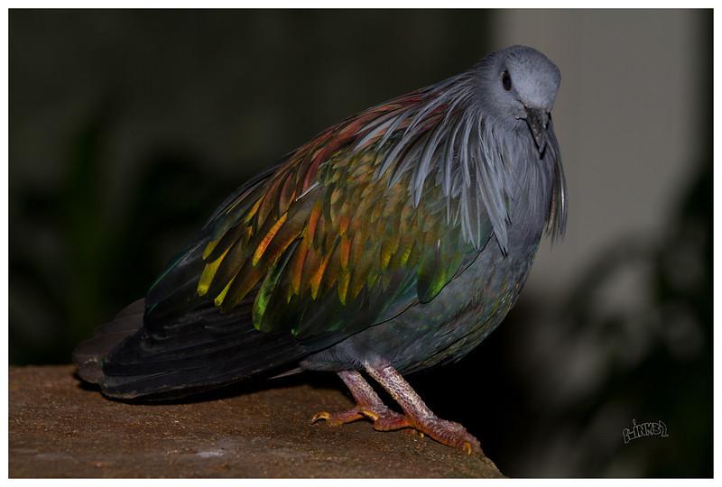 Pete Pigeon (9/16/2012)