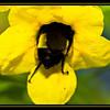 Billy Bumblebee Butt (9/17/2012)