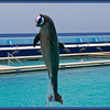 Darwin Dolphin (9/23/2012)<br /> Blue for Prostate Cancer Awareness