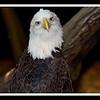 Eddie Eagle (022/2012)