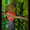 Quincy the Quetzal Bird (10/2/2012)