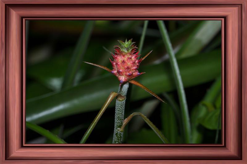 Baby Pineapple (3/30/2012)