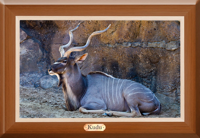 Kenton the Kudu (10/4/2012)