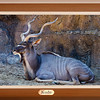 Kenton the Kudu (10/4/2012)