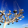 6/14/2012<br /> Shoe Tree<br /> I found the tree in Slab City - a camp in the Colorado Desert (South California) populated by squatters and hippies.