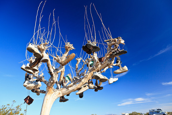 6/14/2012 Shoe Tree I found the tree in Slab City - a camp in the Colorado Desert (South California) populated by squatters and hippies.