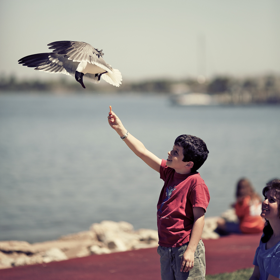 A seagull executes a test pass before circling back around and grabbing a Cheeto from Ethan.