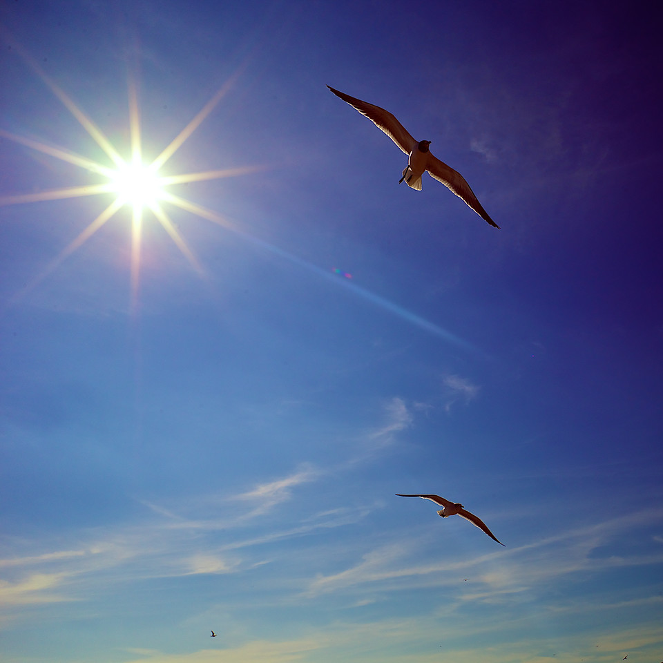 Seagulls around the beach.