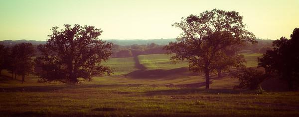 Landscape, Minnesota.