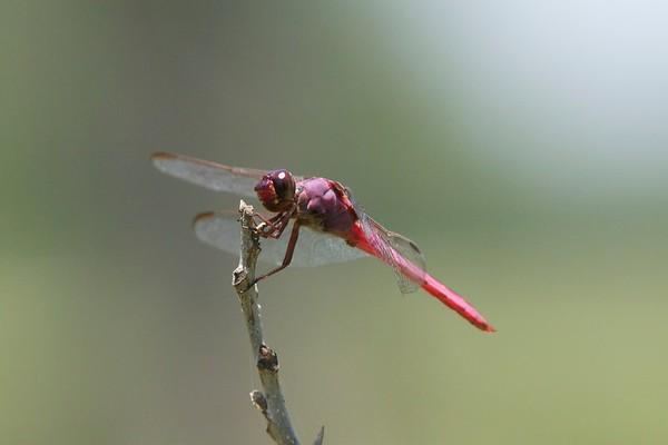 Dragonflies 2012