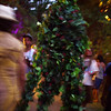 ent sighting (sonic bloom)