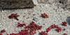 "(6Feb12)  diamorpha beads  <a href=""http://carpelumen.smugmug.com/Photography/2011/February11/15724497_4hcZn5/2/1180855374_oyCge/Medium"">one year ago.</a>  f/11, 1/800s, iso 400."