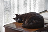 """11Oct12  not his normal napping spot. perhaps that's the reason for his uneasy gaze.  <a href=""""http://carpelumen.smugmug.com/Photography/2011/October11/19283739_7mqCSB#!i=1527164320&k=2DqLLhz"""">one year ago.</a>  f/6.3, 1/15s, iso 2500."""