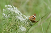 "(21Sep12)  butterfly and flowers. i'm starting to feel like i'm stalkin' 'em.  <a href=""http://carpelumen.smugmug.com/Photography/2011/September11/18807220_dgrDff#!i=1490943076&k=jmHGGRM"">one year ago.</a>  f/8, 1/500s, iso 200."