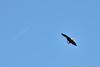 "(27Sep12)  in-flight meal.  <a href=""http://carpelumen.smugmug.com/Photography/2011/September11/18807220_dgrDff#!i=1505362679&k=RN7VxzW"">one year ago.</a>  f/8, 1/500s, iso 200."