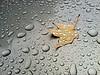 """30Sep12  evidence of rain.  <a href=""""http://carpelumen.smugmug.com/Photography/2011/September11/18807220_dgrDff#!i=1505377013&k=mTr9VxW"""">one year ago.</a>  f/2.8, 1/120s, iso 80."""