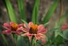 "(28Sep12)  aging flower.  <a href=""http://carpelumen.smugmug.com/Photography/2011/September11/18807220_dgrDff#!i=1505364527&k=5Wr7NNV"">one year ago.</a>  f/8, 1/160s, iso 160."
