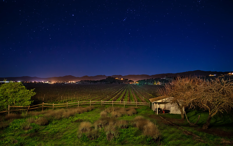 February - Starry Night in the Vineyard