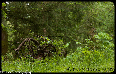 DBuck-20130525-untitled-001-Cooper Mt  Nature Park-17