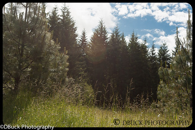 DBuck-20130525-untitled-001-Cooper Mt  Nature Park-6