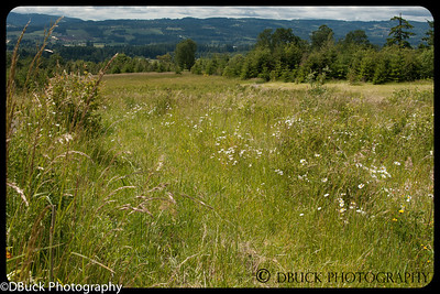 DBuck-20130525-untitled-001-Cooper Mt  Nature Park-93