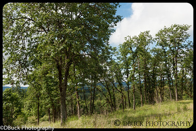 DBuck-20130525-untitled-001-Cooper Mt  Nature Park-71