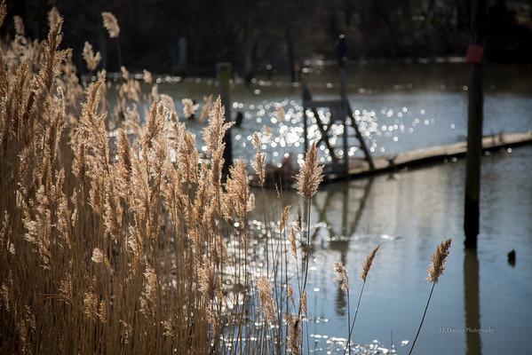 Cohansey River, Fairton New Jersey