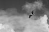 """6Jul13  osprey guarding its territory.  <a href=""""http://carpelumen.smugmug.com/Photography/2012/July12/23903237_fFMkTx#!i=1949750480&k=gwkQnpN"""">one year ago.</a>  f/14, 1/500s, iso 640."""
