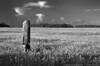 "(11Jul13)  <caption>  <a href=""http://carpelumen.smugmug.com/Photography/2012/July12/23903237_fFMkTx#!i=1961584577&k=nC3Jp5w"">one year ago.</a>  f/11, 1/250s, iso 400."
