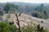 28Mar13<br /> <br /> turkey vulture, arablia mountain.<br /> <br /> f/16, 1/250s, iso 640.