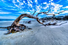 Leatrice Driftwood Beach