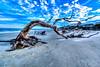Leatrice Driftwood Beach