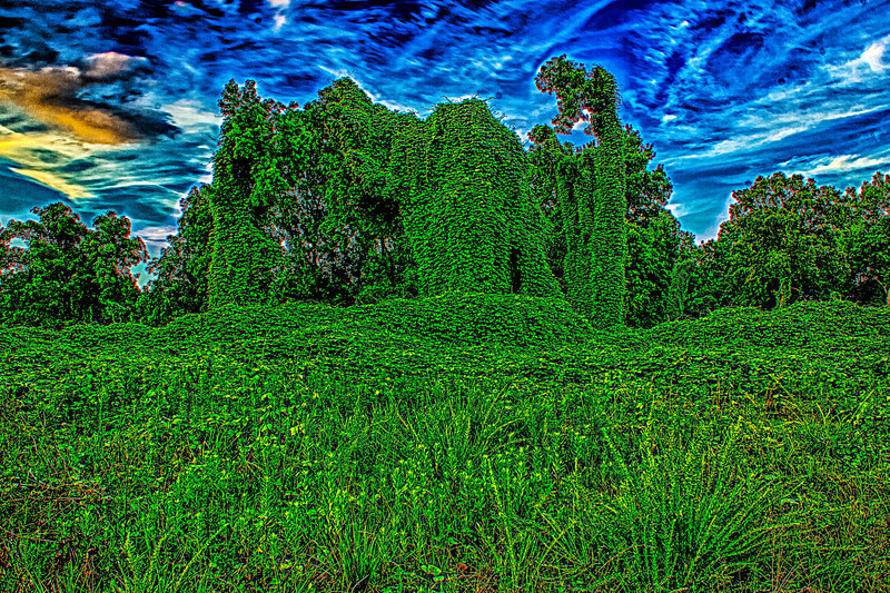 Kudzu Animal Storm. (Japanese Arrowroot). Unknown to landowners the plant is edible and has Medicinal uses, Animal feed, Basketry. This was taken as the sunset behind me a rain storm was passing through with an opening.. Used Promote Control set at .3 and 17 shots so +/- 3AV post processed with Nik HDR Efex Pro 2, Dfine 2, Sharpener Pro 3, Color Efex Pro 4, Lightroom 5 lens correction.. Canon T2i.