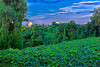 Kudzu Fused.Kudzu Overgrowth Valley. (Japanese Arrowroot). Unknown to landowners the plant is edible and has Medicinal uses, Animal feed, Basketry. This was taken as the sunset behind me a rain storm was passing through with an opening. Used Promote Control set at .3 and 17 shots so +/- 3AV post processed with Photomatix fused then Lightroom 5 for lens correction then some Nik Software.