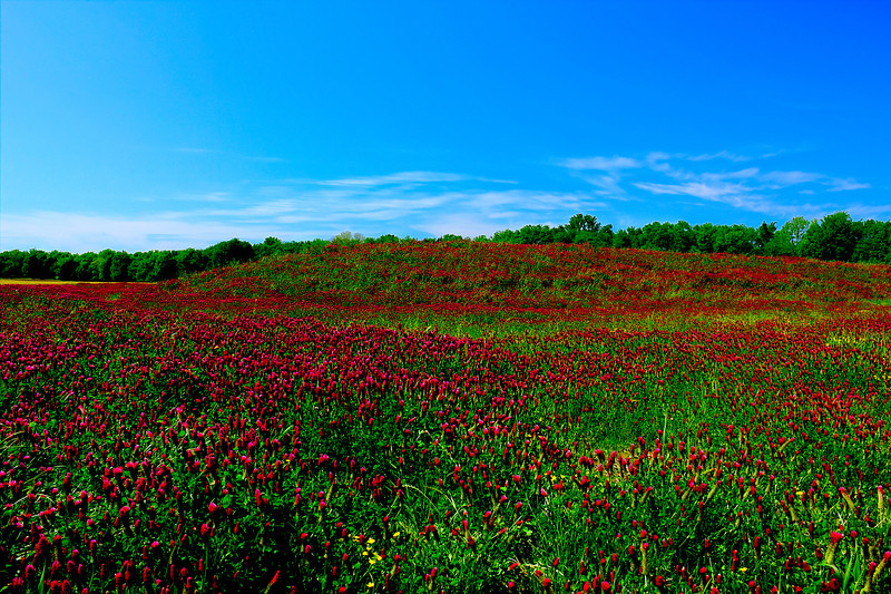 Come Over Red Clover