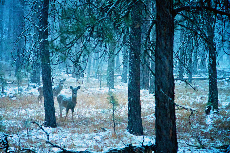 December photo used in my 2014 wall calendar. Taken in Custer County, South Dakota.