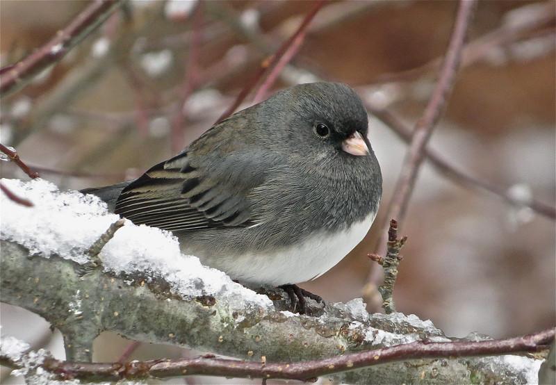 Winner, Birds, Under 18: Andy Eckerson