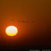 "26Apr14  pelican sunrise, st simons island, ga.  <a href=""http://carpelumen.smugmug.com/Photography/2013/April13/28693682_r4GKQB#!i=2479840254&k=DJ6MD7P"">one year ago.</a>  f/11, 1/1600s, iso 320."