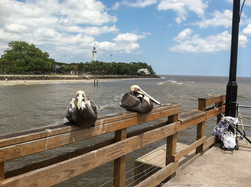 """(30Apr14)  it was a windy day...no, really, the pelicans had settled down to keep out of the wind.  <a href=""""http://carpelumen.smugmug.com/Photography/2013/April13/28693682_r4GKQB#!i=2490983405&k=kXTfb6D"""">one year ago.</a>  f/2.8, 1/1600s, iso 80."""