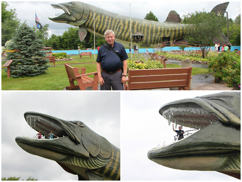 July 23 2014 Fishing Hall of Fame<br /> <br /> That's a big muskie.  We went to this place yesterday in Hayward, Wisconsin.<br /> <br /> I won't be able to comment while we're on the road but I'll catch up when we get back