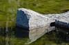"8Feb14   <br><br>small pool of clear water, arabia mountain, dekalb county parks, georgia.   <br><br><a href=""http://carpelumen.smugmug.com/Photography/2013/February13/27837518_jKJkNf#!i=2369372228&k=ZwbwRj4"">one year ago.</a>   <br><br>f/11, 1/160s, iso 400."