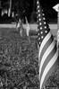 "4Jul14  patriotic display.  <a href=""http://carpelumen.smugmug.com/Photography/2013/July13/30293485_qQqWmX#!i=2614404182&k=sr6Qrzn"">one year ago.</a>  f/10, 1/640s, iso 320."