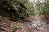 7Mar14<br /> <br /> along the green blazed trail, warwoman dell, rabun county, georgia.<br /> <br /> f/11, 1/125s, iso 3200.
