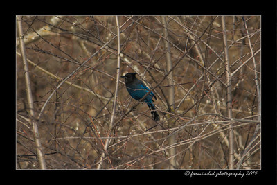 Out and About - Birds