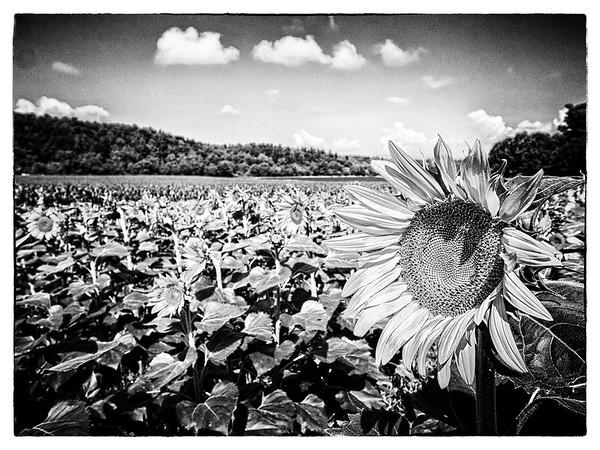 2015-7 Biltmore flowers