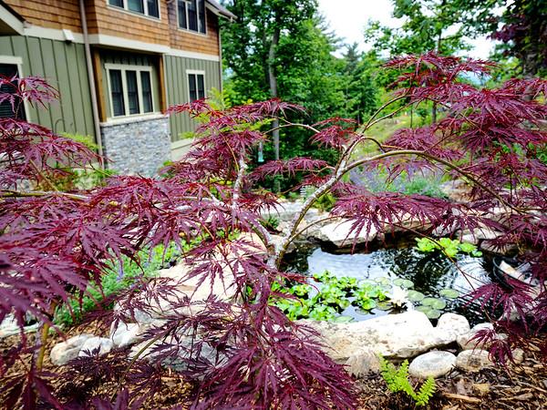 2015 Asheville home garden