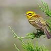 Winner, Birds, Under 18: Joel Eckerson